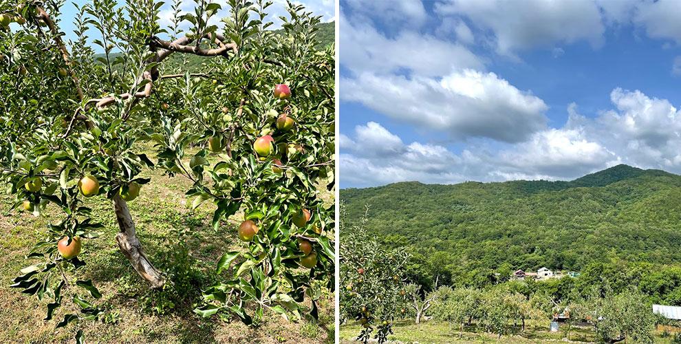リンゴと景色